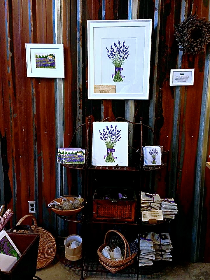 Woodinville Lavender Prints And Cards