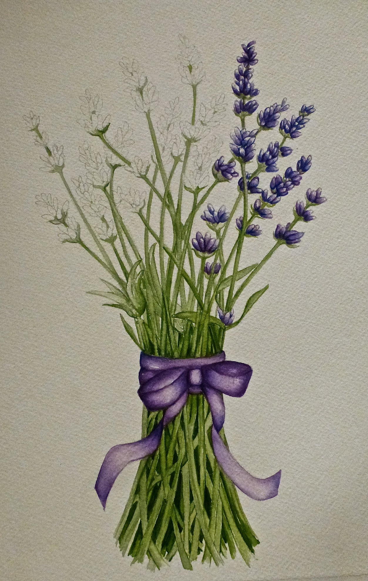 Lavender Progressing…